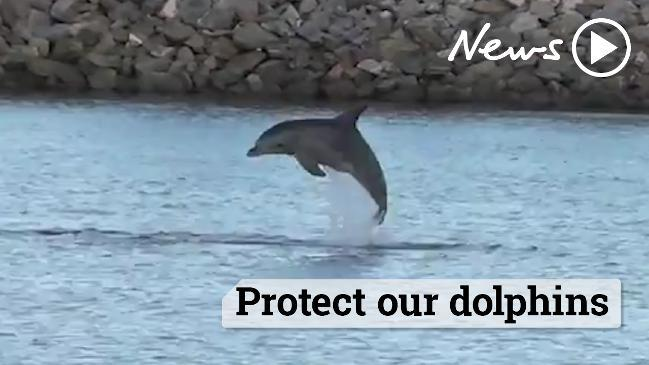 Protect our dolphins