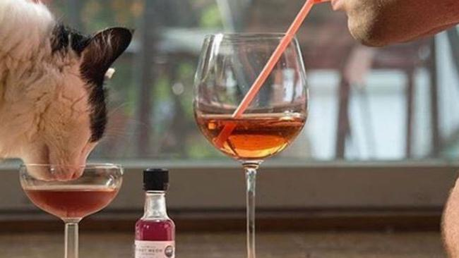 Wine for your cat: Pinot Meow is non-alcoholic but contains catnip