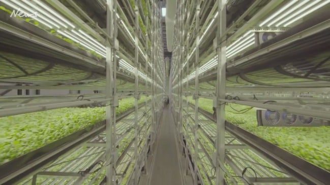 Inside the world's largest indoor vertical farm