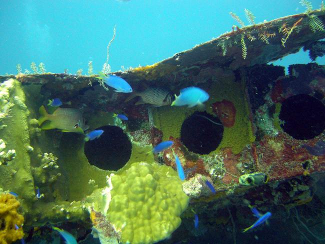 The hull of an aircraft is a fish playground. Picture: mattk1979.