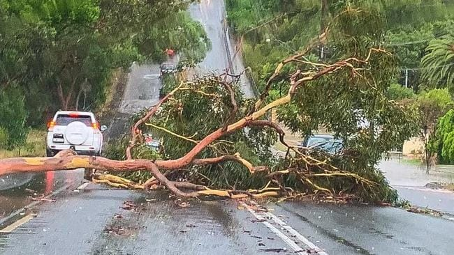 A tree fell across the Big Dipper at President Ave in Miranda. Picture: Supplied