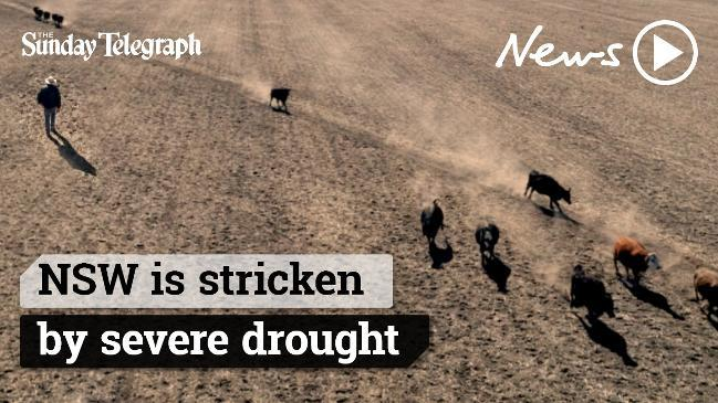 NSW stricken by severe drought