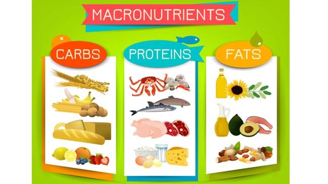 Foods high in each macronutrient. Image: iStock.