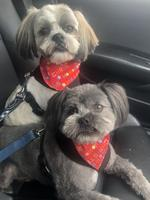 Murphy and Charlie – all groomed and ready to go. Picture: Nicole May