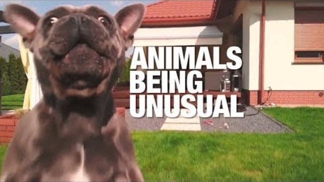 Animals Acting Strangely