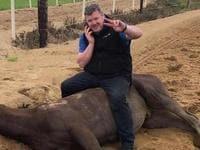 Gordon Elliott sits on a dead horse.