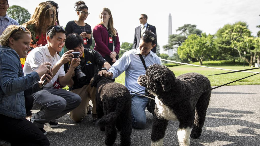 Sunny and Bo were popular fixtures at the White House. (Photo by Drew Angerer-Pool/Getty Images)