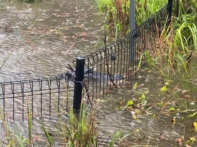 Staff had to keep watch on the Alligator Lagoon as the waters came dangerously close to the fence line. Picture: Australian Reptile Park