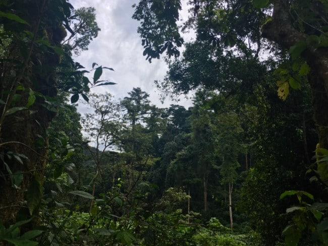 Gorilla spotting in Uganda. Picture: Julia D'Orazio