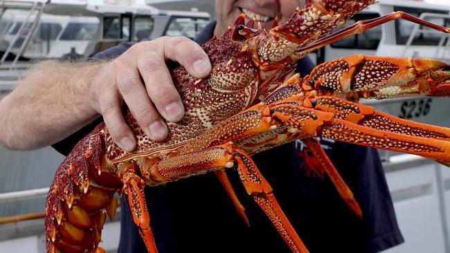 Illegal Rock Lobster Fishing Businessmen Fined For Major