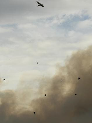Thick smoke has covered surrounding suburbs. Picture: Nicole Garmston