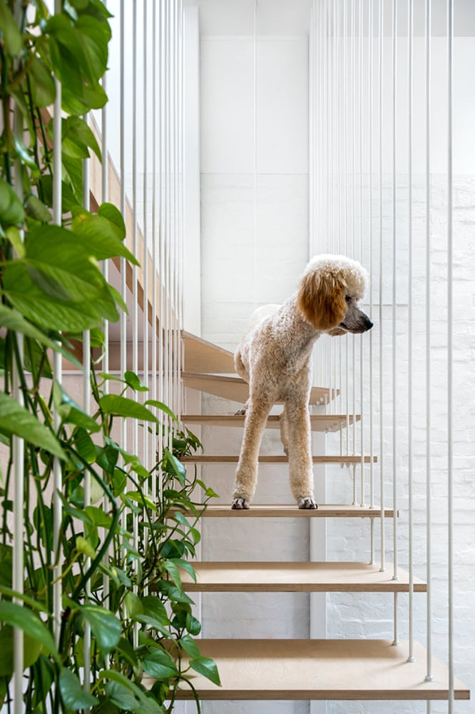 The new book combining our love of interiors and animals