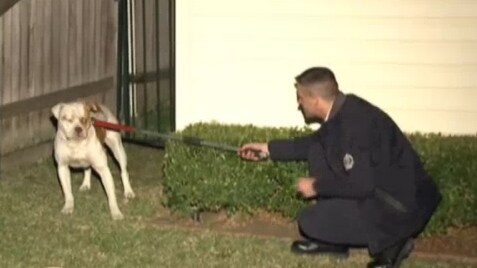 Dog attack in Sydney's west averted