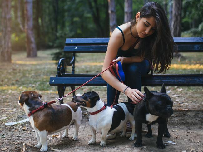 A side hustle could be anything from developing apps to walking dogs. Picture: iStock