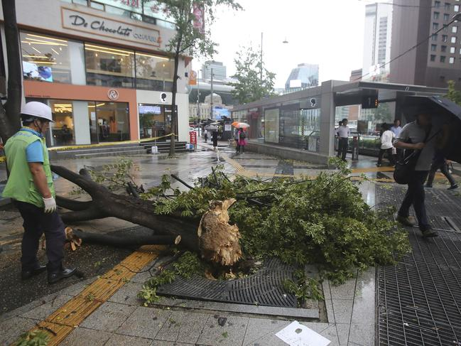 A fallen tree caused by Typhoon Lingling lies across a walkway in Seoul, South Korea. The typhoon has killed three. Picture: AP Photo