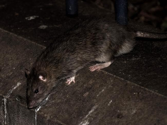 South African police confirmed the baby girl had been eaten by rats and that the baby's mother had been arrested for child neglect. Picture: AFP/Philippe Lopez