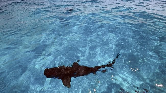 The hand with a wedding ring was found inside the shark.