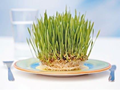 Wheatgrass For Good Health