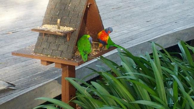 Lorikeets feeding at a nature reserve near the woman's home. Source: Google Maps