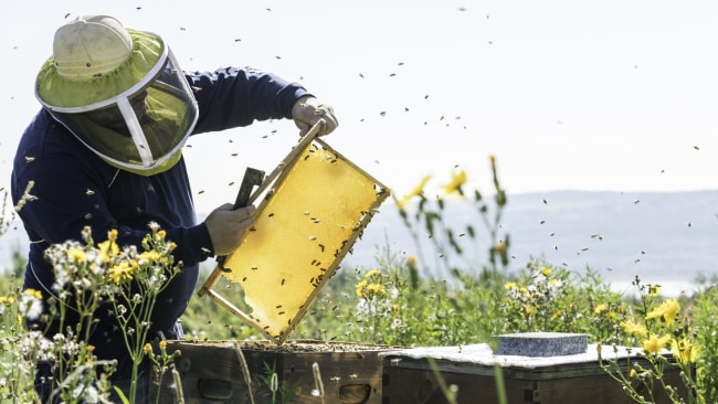 Beekeepers are alarmed at the rate at which their bees are dying in the US. Image: iStock