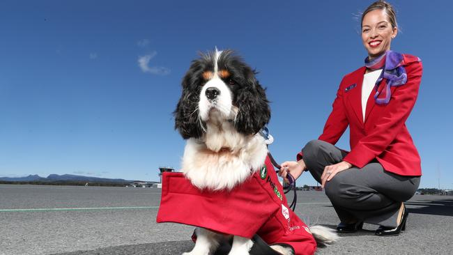 Virgin Australia partners with JetPets, rescue dogs fly for free