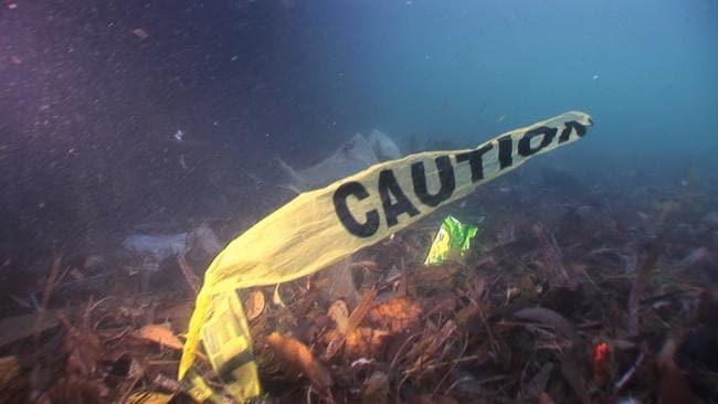 Rubbish in Sydney Harbour. Photo Courtesy Seven News