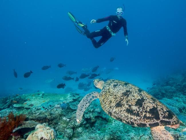 Further from shore, the diversity at the lower end of the reef is breathtaking. Picture: Stuart Ireland