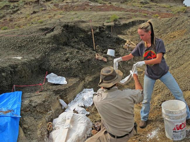 This photo taken on March 29 by the University of Kansas shows Robert DePalma and field assistant Kylie Ruble excavate fossil carcasses from the Tanis deposit. Picture: Robert DePalma/Kansas University