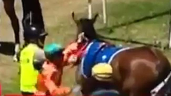 """Jockey Dylan Cabouche suspended after punching racehorse """"She's Reneldasgirl""""."""