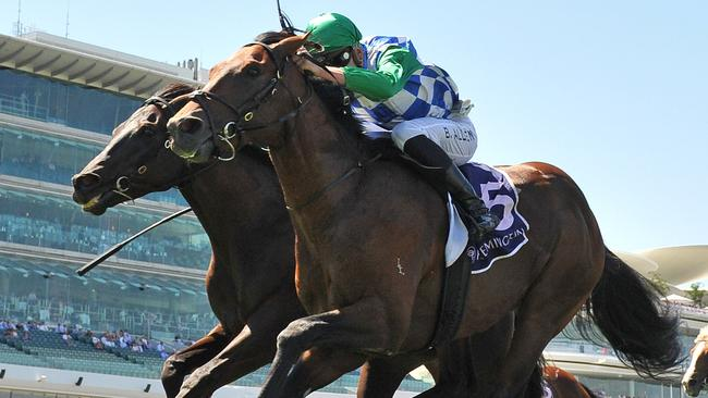 Fifty Stars will be one of four runners from the Team Hayes stable in the PB Lawrence Stakes at Caulfield. Picture: AAP