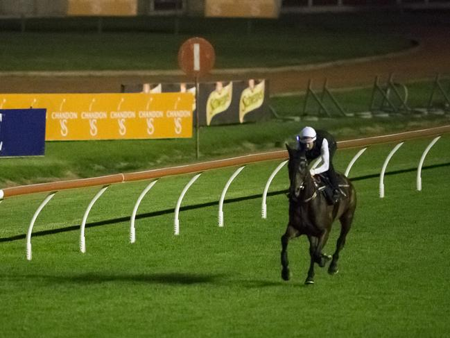 Winx doing dawn track work at Rose Hill. Picture: Dylan Robinson