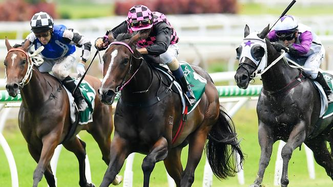 Rothfire will chasing his fourth straight win on Saturday at Doomben. Picture: AAP
