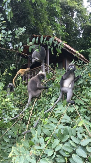 Check out these cute monkeys! They would move above us during class.