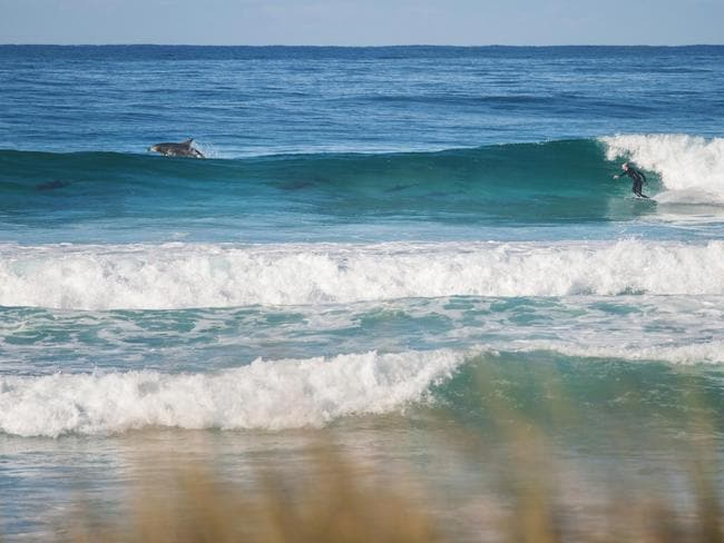 That's more like it ... Craig Brokensha surfing with a pod of dolphins. Picture: Tristan Fitzherbert-Smith.