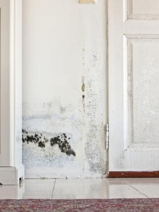 Mould is a common problem in Sydney's buildings.