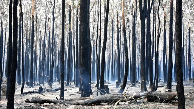 Blackened trees in Old Bar on Sunday. Picture: Peter Parks/AFP