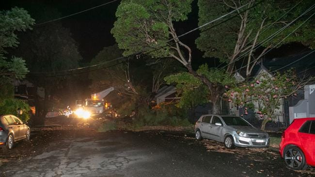 Energy crews work to repair lines and a tree after it fell. Picture: Damian Hofman