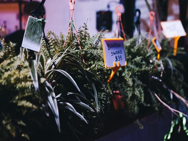 Plant lovers and disco loves will be in heaven at the Wandering Jungle.