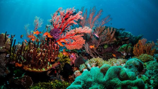 In our own backyard, this is why you want to visit the Great Barrier Reef in 2020.
