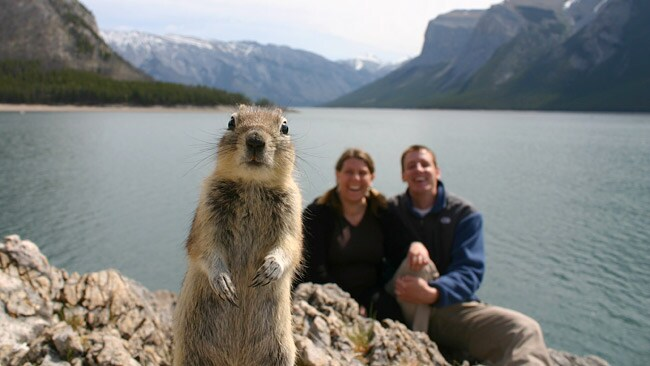 Nuts the squirrel became an internet sensation after jumping into a photograph with tourists. Picture: AFP