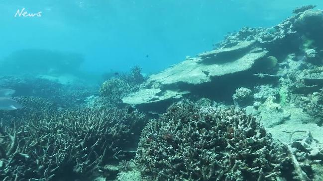 Coral bleaching of the Great Barrier Reef