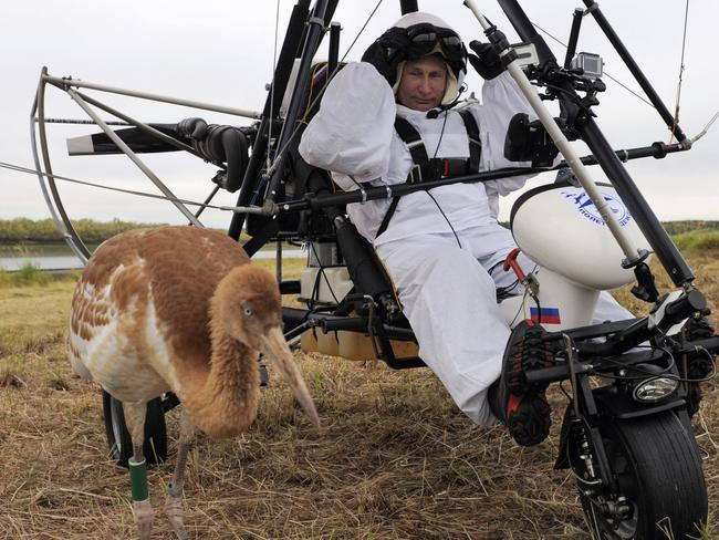 Image conscious ... Russian President Vladimir Putin prepares to pilot a motorised hang glider while looking at a crane. Picture: AFP