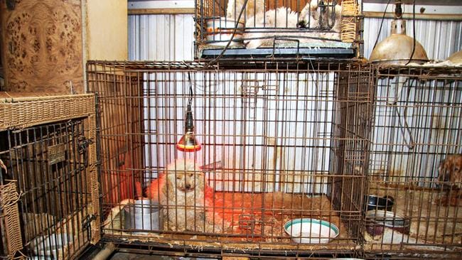 Puppy factories: How Oscar the dog inspired a campaign to