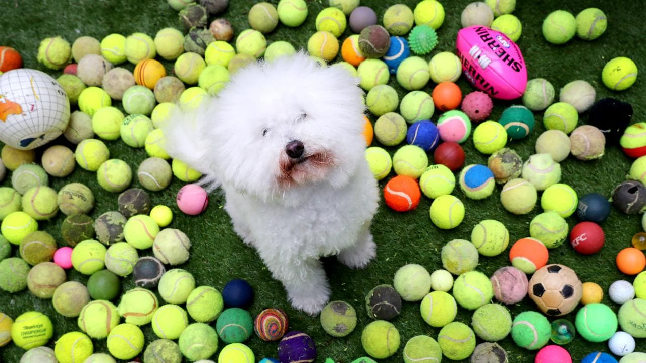 Henri, 11, collects tennis balls. Picture: Tait Schmaal