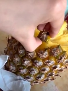 Through super loud chomps, Dillon gingerly plucks a piece of pineapple, using the skin. Picture: Twitter