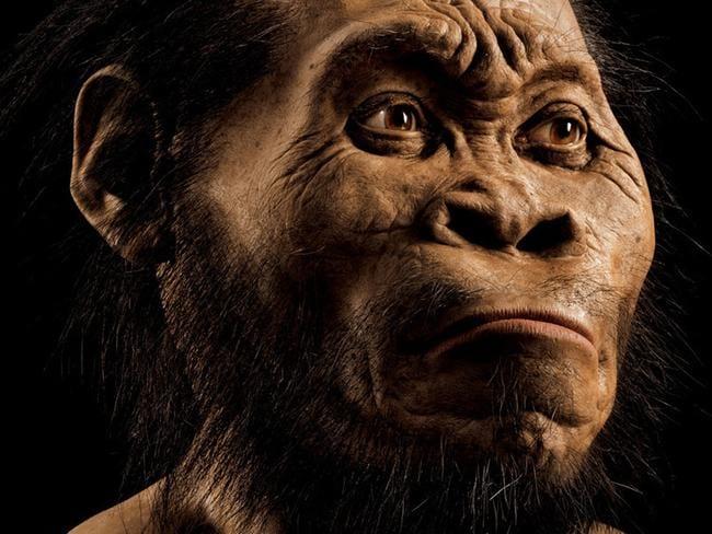 A reconstruction of Homo naledi.