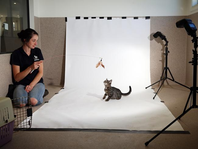 Sunday Telegraph photographer Sam Ruttyn captures the purrfect picture at the Animal Welfare League in Kemps Creek. Picture: Sam Ruttyn