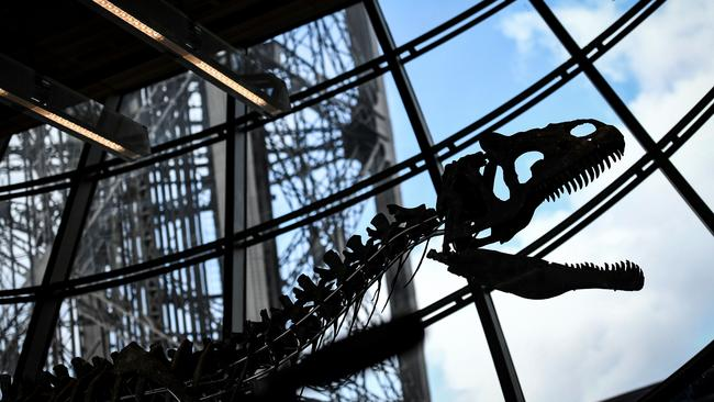 The skeleton of an unidentified type of dinosaur fetched more than $AU3 million at an auction staged on the first floor of the Eiffel Tower in Paris.