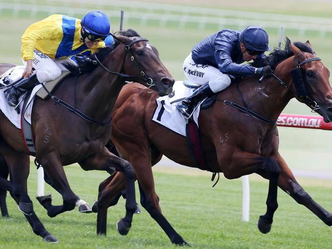 Oohood has won $996,100 in prizemoney in her first campaign but remarkably is yet to win a race. Picture: Michael Klein