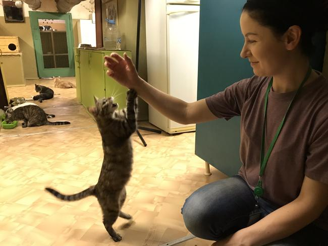 Volunteer worker, Anastasia, plays with one of the cats that live in the basement of The State Hermitage Museum, St Petersburg. Picture: Elizabeth Fortescue